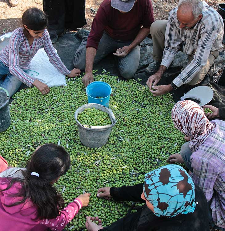 Canaan Fairtrade olive Palestina